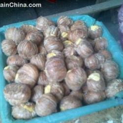 Zongzi (糭 子) or rice dumplings for Dragon Boat Festival