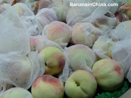 peaches-autumn-southern-china