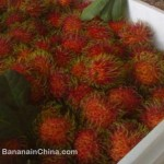 rambutans-imported-into-china