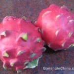 Fire Dragon Fruit is huǒ lóng guǒ (火龙果)