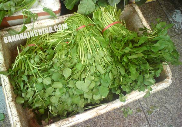 watercress-vegetable-Chinese-China