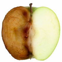 apple_browning-oxidation-process